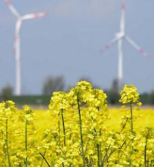 Gelbe Blüten eines Rapsfeldes in Seester - Windkraftanlage.