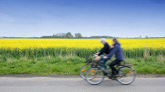 Fahrradtour durch die Elbmarsch - blühendes Rapsfeld in  Seester; Paar Fahrrad fahrend.
