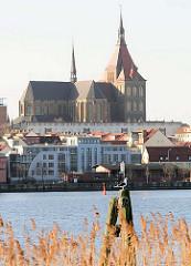 Alte Holzdalbe am Ufer der Unterwarnow - eine Möwe sitzt auf der Spitze; am gegenüberliegenden Warnoufer Wohnhäuser und die Marienkirche.