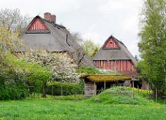 Bauernhäuser mit Reet gedeckt - grüne Wiese; Bilder aus Seester, Kreis Pinneberg.