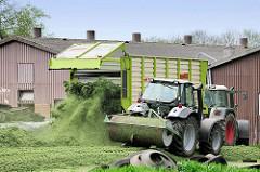 Abladen vom geernteten Gras auf der Miete in einem Hof in Kollmar; vom Hecklser wird das frische Gras verteilt - Traktoren / Walzschlepper bereiten die Grasmiete vor.