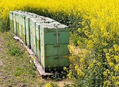 Zur Rapsblüte werden Bienenstöcke mit den Bienenvölkern in die Rapsfelder gestellt.