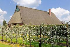 Blühende Apfelbäume - Bauernhof in Seestermühe.