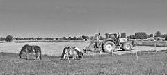 Weidende Pferde - Trecker / Traktor bei der Landarbeit in Haseldorf - Schwarz Weiß Fotografie.