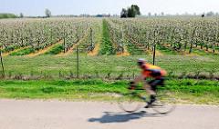 Fahrradweg in der Haseldorfer Marsch - blühende Apfelbäume, Fahrradfahrer.