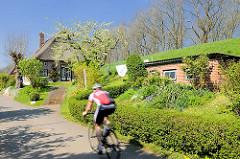 Fahrradausflug in der Haseldorfer Marsch; Radfahrer / Rennradfahrer auf der Strasse am Deich in Haselau - reetgedecktes Wohnhaus, blühender Obstbaum - Frühling.