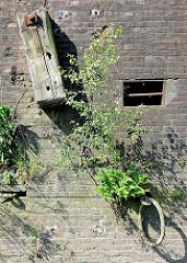 Alter Hafenkai in Hamburg; eingelassener Eisenring zum Vertäuen von Schiffen. Im Ziegelmauerwerk wächst aus den Mauerfugen Wildkraut, junge Birken und Gräser.