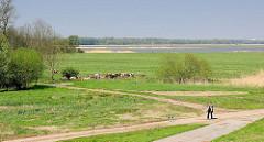 Blick vom Elbdeich auf das Deichvorland an der Haseldorfer Binnenelbe; insgesamt 2056 Hektar grosses Naturschutzgebiet; Spaziergängerin mit Hund, Kuhherde.