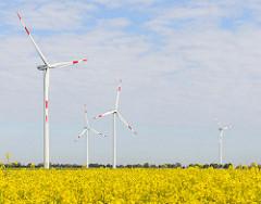 Windkraftanlagen - blühender Raps; Bilder aus Neuenfelde b. Elmshorn.