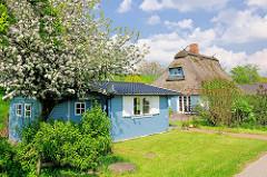 Frühlingsbilder aus Seestermühe - Reedachhaus, Wohnhaus mit blauen Fensterrahmen; Holzschuppen blau gestrichen; blauer Himmel, weisse Wolken.