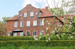 Wohnhaus im Schlossgebiet von Plön - Backsteinfassade, hohe Hecken - blühender Apfelbaum.