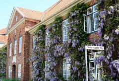 Fassade des St. Georg-Hospitals mit violett blühenden Glyzinien / Blauregen; das Gebäude wurde 1770 als Armen- und Siechenhaus erbaut / Hofbaumeister Greggenhoffer.