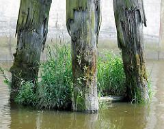 Vermoderter Holzdalben im Hamburger Hafen / Billehafen - Zeugnis der Hafengeschichte, dicht mit Gras bewachsen.