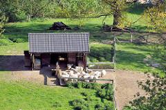 Schafsstall mit einer Herde Schafe - Bilder aus der Holsteinischen Schweiz bei Plön.