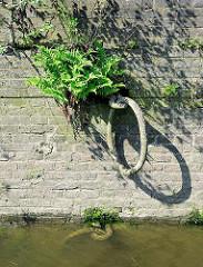 EIsenring / Festmacherringe an einer Kaimuaer im Hamburger Hafen; in den Ritzen der Steinmauer wachsen Farn und Wildkraut.