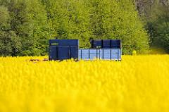 Blauer Anhänger zwischen gelb blühendem Raps - Rapsblüte im Frühling in Seestermühe, Schleswig-Holstein.