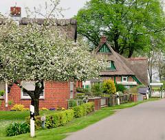 Dorfstrasse in Kollmar, Reetdachhäuser - Wohnhäuser mit Reet gedeckt, blühender Apfelbaum.