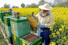 Der Imker hält die Honigwabe in der Hand -  Bienenstöcke; Rapsblüte in Seestermühe.