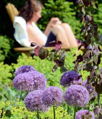 Ruhezone im Wandsbeker Botanischen Sondergarten - violette Kugelblüten einer Zwiebel.