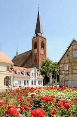 Kirchturm der Jacobikriche in der Hansestadt Stendal - blühende Rosen.