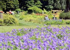 Botanischer Sondergarten in Hamburg Wandsbek - Besucher der Grünanlage auf Bänken in der Sonne; blaue Blumen.