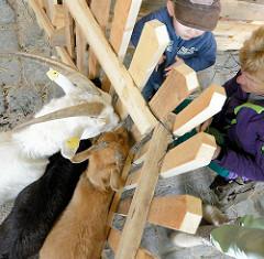 Bergedorfer Hafenfest / Hafenmeile - Menschen und Ziegen betrachten sich durch einen Holzzaun.