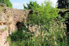 Innenansicht der Torruine des Stendaler Tors in Gardelegen - Sträucher und kleine Bäume wachsen in der Ruine.