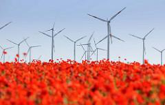 Mohnfeld bei Havelberg / im Hintergrund Windräder, Windkraftanlage.
