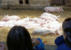 Kinder beobachten die schlafenden Schweine auf dem Gut Wulksfelde während des jährlich stattfindenden Bauernmarkts.