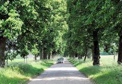 Lindenallee in Havelberg - Lindenweg, Brautweg; der Überlieferung nach hatte jede Braut, die den Weg nutzte eine Linde zu pflanzen hatte.
