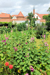 Garten mit blühenden Blumen - im Hintergrund die Stadtmauer und St. Marienkirche von Kyritz.
