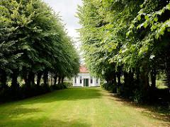 Bäume der historischen Lindenallee in Seestermühe - Teehaus des Gutshofs von Kielmansegg.