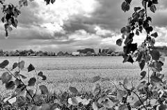 Blick über ein Kornfeld zu Wohnhäusern am Altenfeldsdeich in Sestermühe - Gewitterwolken am Himmel, Lindenblätter / Schwarz Weiss Fotografie.