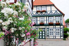 Blühende Klettterrosen an einer Hausfassade, Fachwerkhaus in der Hansestadt Salzwedel.