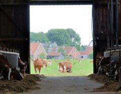 Kuhstall und Kühe auf der Weide - Bilder aus Seestermühe, Kreis Pinneberg.