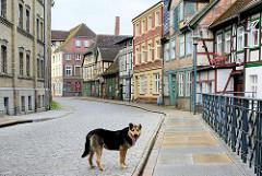 Historische Architektur an der Mühlenstrasse in Grabow - einsamer Hund auf der Strasse.