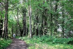 Wanderweg zwischen hohen Bäumen im Plauer Schlosspark / Brandenburg an der Havel.