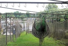 Netze und Reusen sind zum Trocknen aufgehängt - Fischer an der Havel in Plaue / Brandenburg  a. d. Havel.
