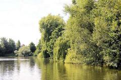 Das Ufer des Billekanals in Hamburg Rothenburgsort ist dicht mit Bäumen und Sträuchern bewachsen.
