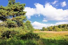 Wiese mit Bäume an der Alster in Henstedt-Rhen; blauer Himmel, weisse Wolken.