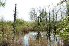Brackwasser alte Süderelbe - abgestorbene Bäume im Wasser - Bilder aus dem Hamburger Stadtteil Francop.