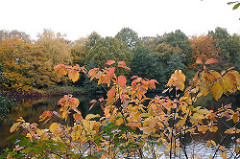 Herbstbäume am Seeufer von Hamburg Bramfeld.