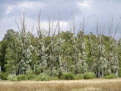 Bäume und Wiese Naturschutzgebiet, Naherholungsgebiet Duvenstedter Bbrook