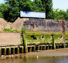 Kaimauer bei Niedrigwasser im Hamburger Hafen - der Bereich bei Hochwasser ist mit Algen bewachsen. Bei Ebbe zeigen sich die Baumstämme, die das Fundament der Kaianlage bilden. Holzdalben sind mit Gräsern bewachsen - lange Eisentreppe.