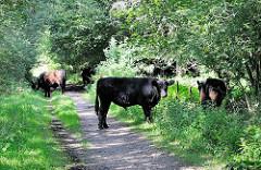 Eine Herde Rinder steht auf dem Wanderweg im Naturschutzgebiet Höltingbaum - die Rinder fressen für den Naturschutz und erhalten so wertvolle Lebensräume.