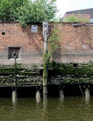 Kaimauer bei Ebbe im Hamburger Hafen; eingelassener Eisenpoller / Eisenring und verwitterter Streichdalben, mit jungen Bäumen und Gräsern bewachsen. Bei Niedrigwasser zeigen sich die Baumstämme, die das Fundament der Kaianlage bilden.