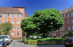 Wohnen in der Hansestadt Hamburg - Strassenbäume im Wohngebiet, Wohnanlage Leverkusenstieg, Bessemerweg - HH-Bahrenfeld.