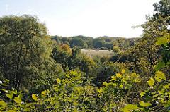 Herbstliche Bäume und Wiesen am Ufer der Alster.