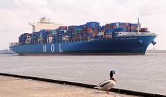 Das 316 m lange Containerschiff MOL CREATION auf der Elbe vor Hamburg Blankenese; das Frachtschiff kann 8100 TEU Container transportieren - ein Erpel steht auf dem Ponton und sieht auf das Wasser.