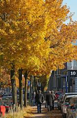 Ahorn im Herbst Berzeliusstrasse, Stadtteil Billbrook.